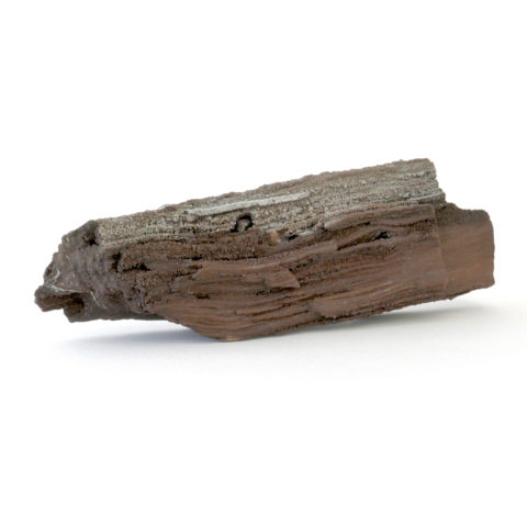 petrified wood saxony germany place 8 healing